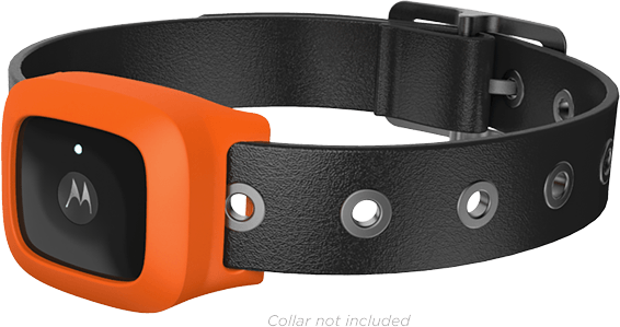 Motorola VerveLife: новая линейка носимых аксессуаров